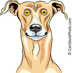 Vector Greyhound Dog breed smile - color sketch of a closeup...