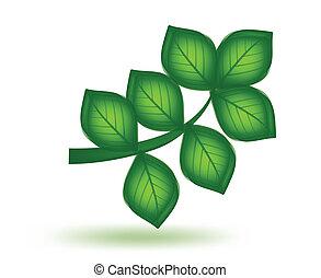 vector, groene, leaf.