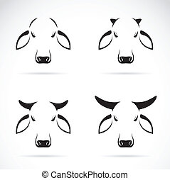 Vector group of cow