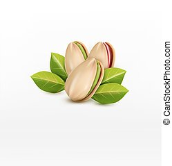 vector group of pistachio nuts, isolated on a white background