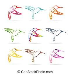 vector, grupo, de, colibrí, blanco, plano de fondo
