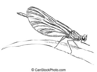 Resting Dragonfly - Vector hand draw : Resting Dragonfly
