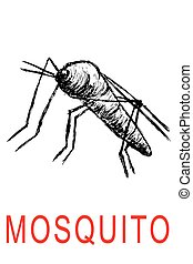 Hand Draw Sketch of Mosquito