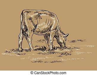 Vector hand drawing cow