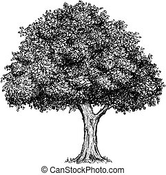 Vector Hand Drawing Drawn Tree