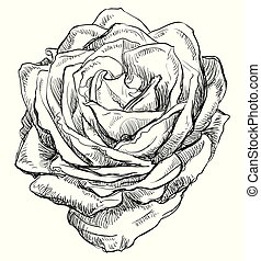 Vector hand drawing flower 4