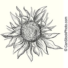 Vector hand drawing flower 7