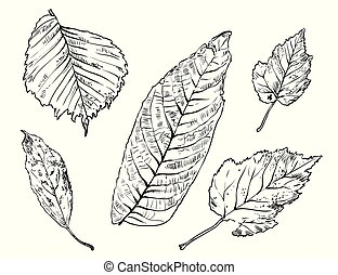 Vector hand drawing leaves 4