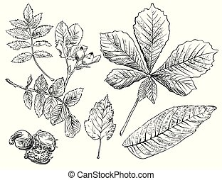 Vector hand drawing leaves 7