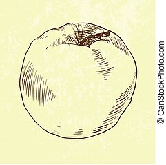 vector hand drawn apple