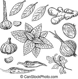Vector hand drawn culinary herbs and spices set