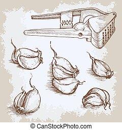 Vector hand drawn garlic set. Vintage retro background with sketched garlics. Kitchen herbs and spices illustration.