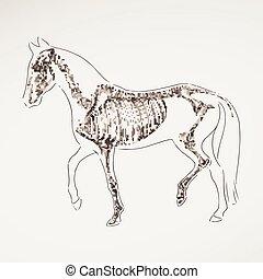 Vector Hand Drawn Horse Skeleton
