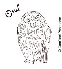 vector hand drawn illustration of owl