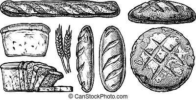 set of different breads - Vector hand drawn illustration set...
