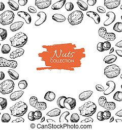 Vector hand drawn nuts illustration. Engraved.
