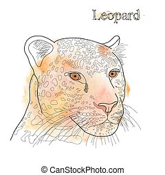 vector hand drawn pencil watercolor illustration of leopard with label