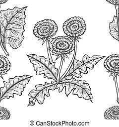 Pattern of seamless Hand drawn Coltsfoot in engraving style. Vector images of medicinal plants. Detailed botanical illustration for your design. Biological additives are. Healthy lifestyle.