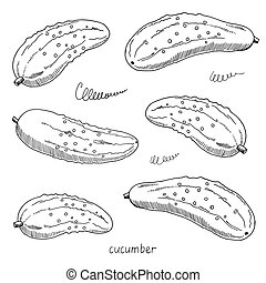 Vector hand drawn sketch of cucumbers. Black and white illustration isolated on white background