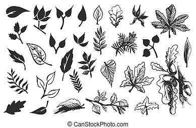 Vector Hand drawn sketch of leaves illustration on white background