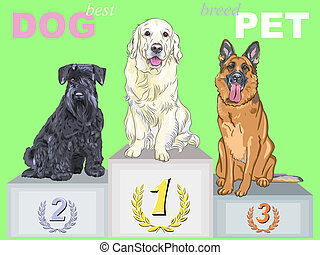 smiling dog champion of different breeds on the podium