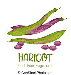 Vector haricot isolated on white background.Vegetable...