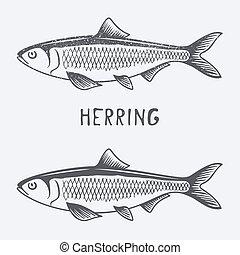 vector, haring, illustratie