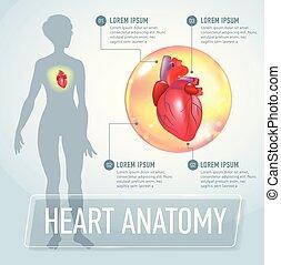 Vector heart infographics banner illustration
