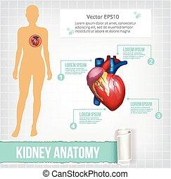 Vector heart infographics banner