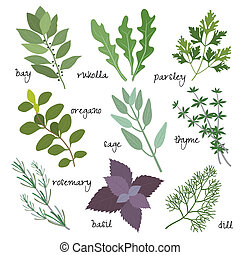 vector herbs - healing, medicinal and fragrant herbs, vector...