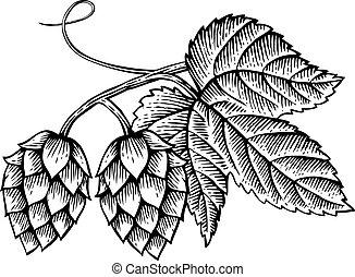vector, hojas, vendimia, icono, (hand, dibujado, saltos, grabado, style), ilustración