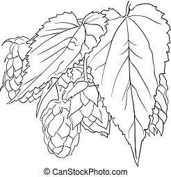 Vector Hop Plant Sketch, Outline Single Black Drawing Isolated.