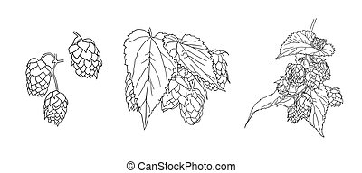Vector hops plant sketches set isolated on white background, black outline drawings, illustration template.