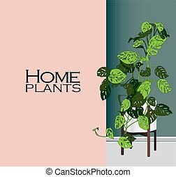 Vector Houseplants in a container for indoor use as a house ...