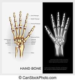 vector, hueso, mano, ilustración