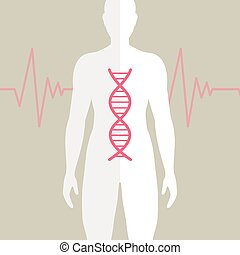 Vector Human DNA