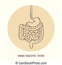 Vector human hand-drawn digestive system illustration.
