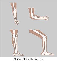 vector human knee