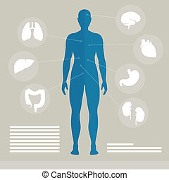 Vector Human Organs - Vector Illustration of Human Organs