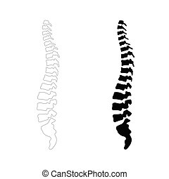 Vector human spine illustration