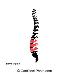 Vector human spine structure isolated silhouette...