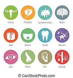 Vector icon set of human internal and external organs like uterus prostate brain skin breast tooth eye neuron nose ear blood vessel and lymphonodus in flat style
