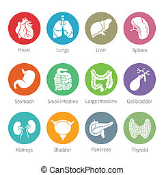 Vector icon set of human internal organs in flat style -...