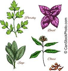 Vector icons of spice seasonings herb flavorings