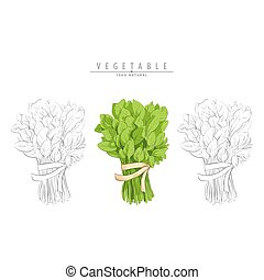 bunch of spinach on white - vector illsutration of bunch of...