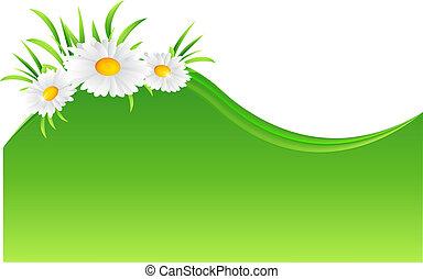vector, illustratie, van, chamomile, bloem