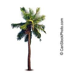 vector, illustratie, van, de, palmboom