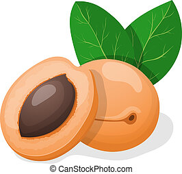 Vector illustration. Apricots with leaves. - Vector...