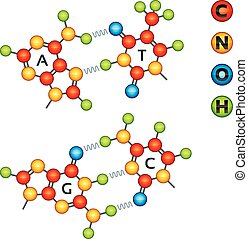 Atomic structure of DNA molecules in bright colors.