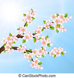 Sakura - Vector illustration beautiful branches of Sakura on...